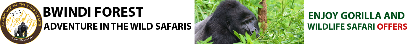 Bwindi Forest National Park | Kibale Forest National Park - Bwindi Forest National Park