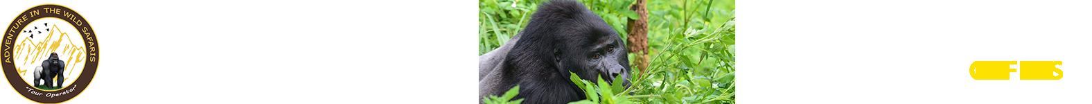 Bwindi Forest National Park | Uganda Gorilla Trekking